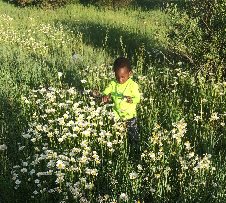 field of flowers boy spring