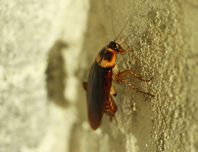 cockroach on a wall outdoors