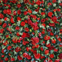 Red Garden Flower Wall