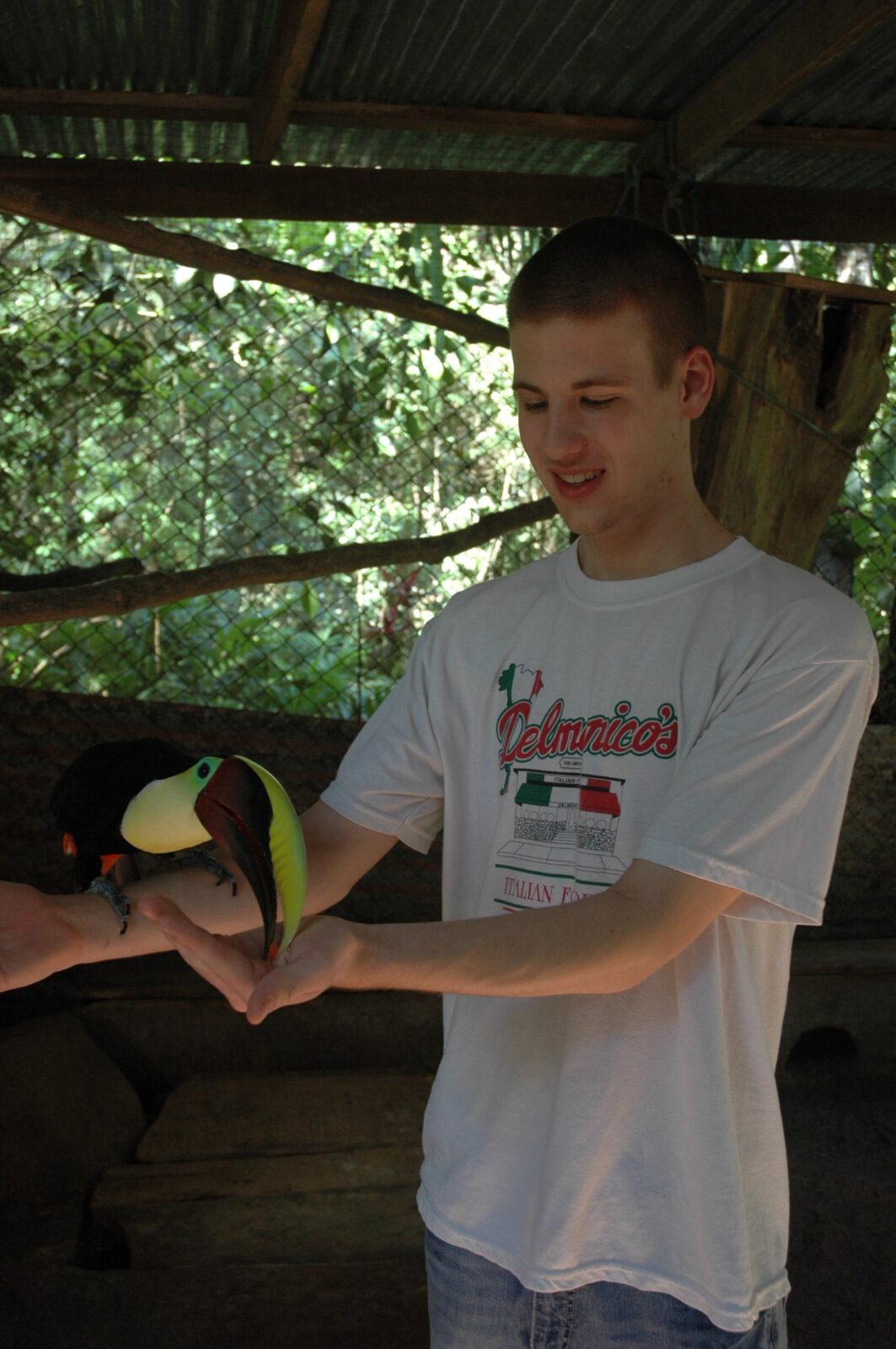 feeding toucan costa rica
