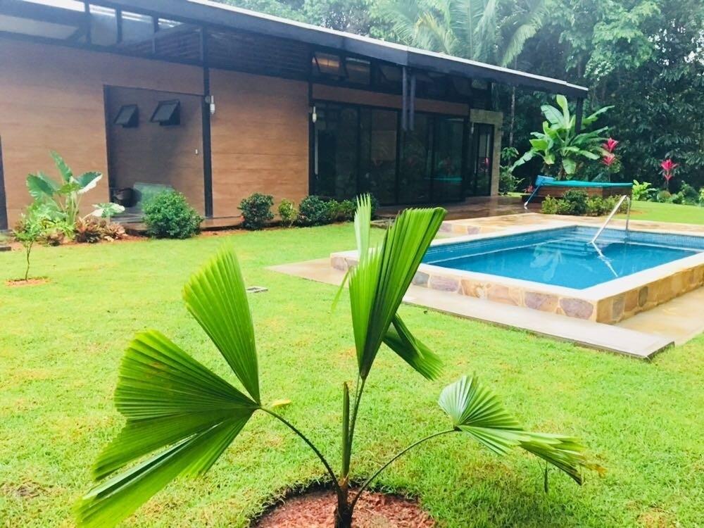casa cusinga pool tree