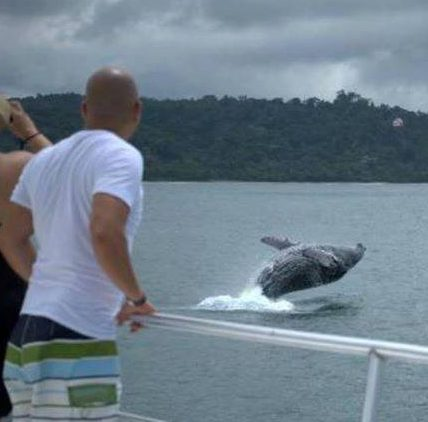 costa rica whale watching