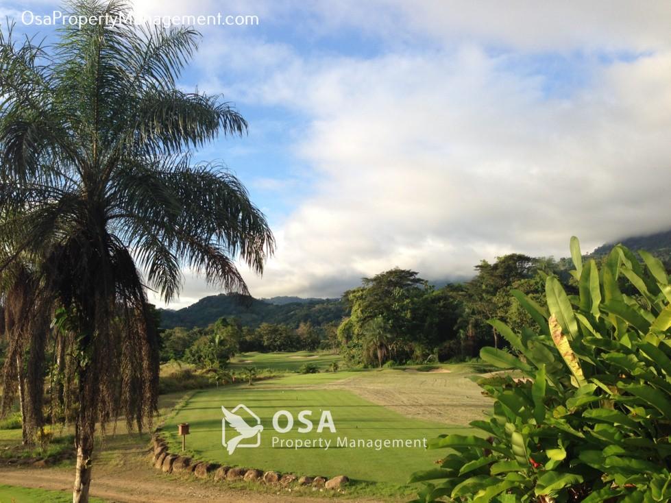 san buenas golf course palm tree