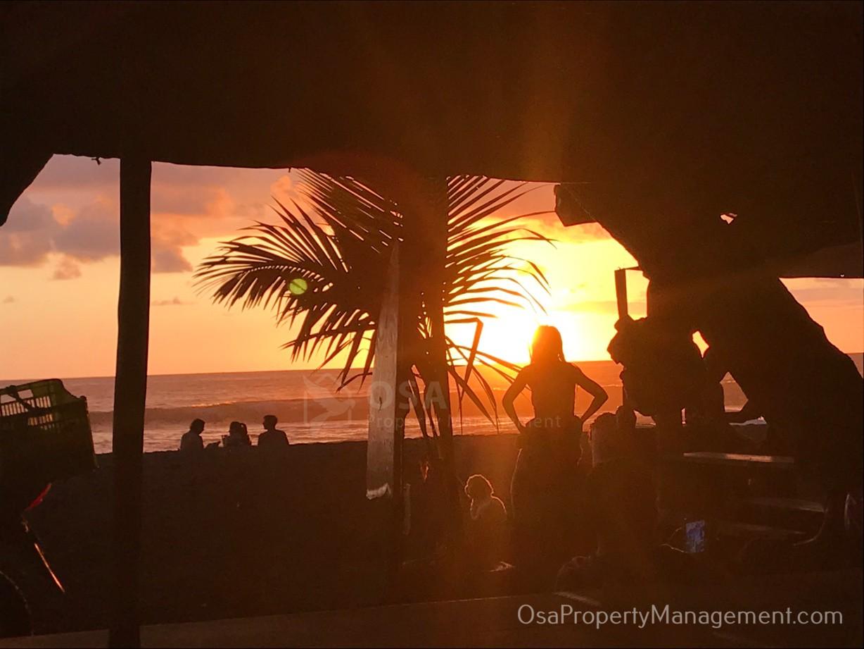 playa hermosa de osa palm tree