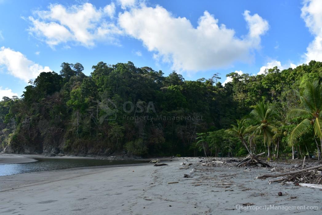 playa tortuga ojochal north jungle