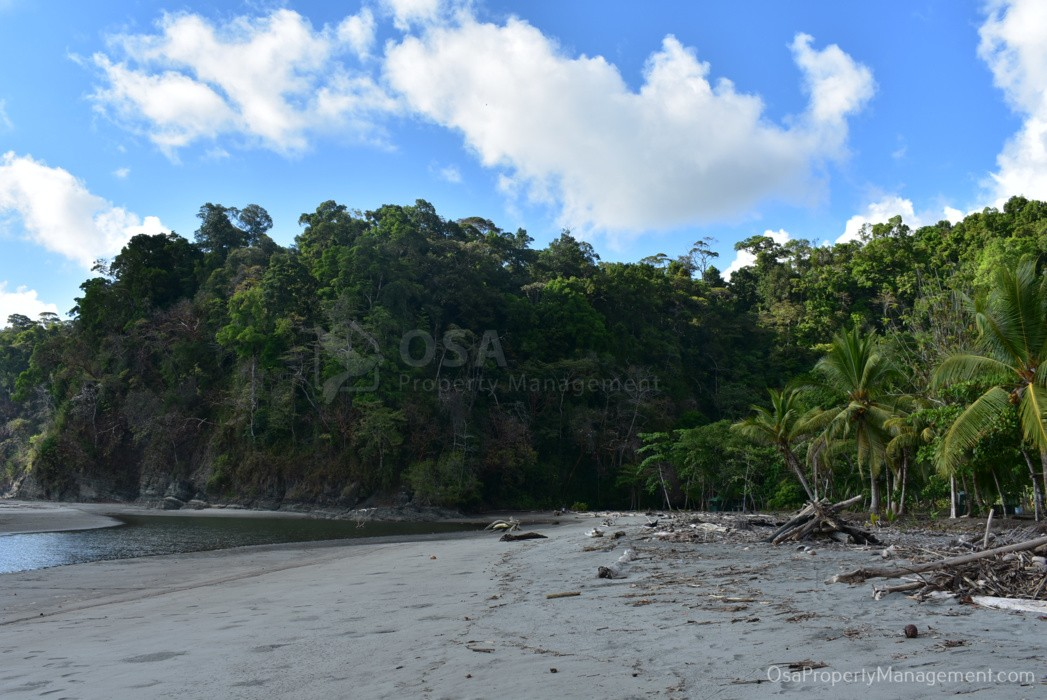 playa tortuga ojochal north jungle