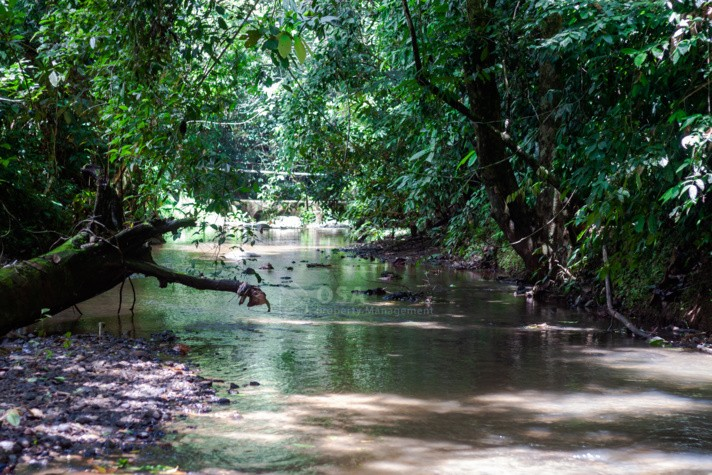 ojochal secluded stream