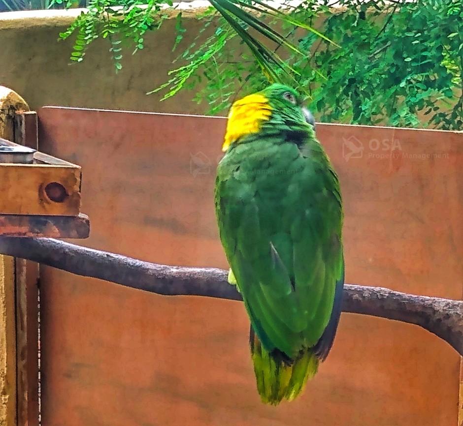 parrot at villas alturas wildlife sanctuary dominical