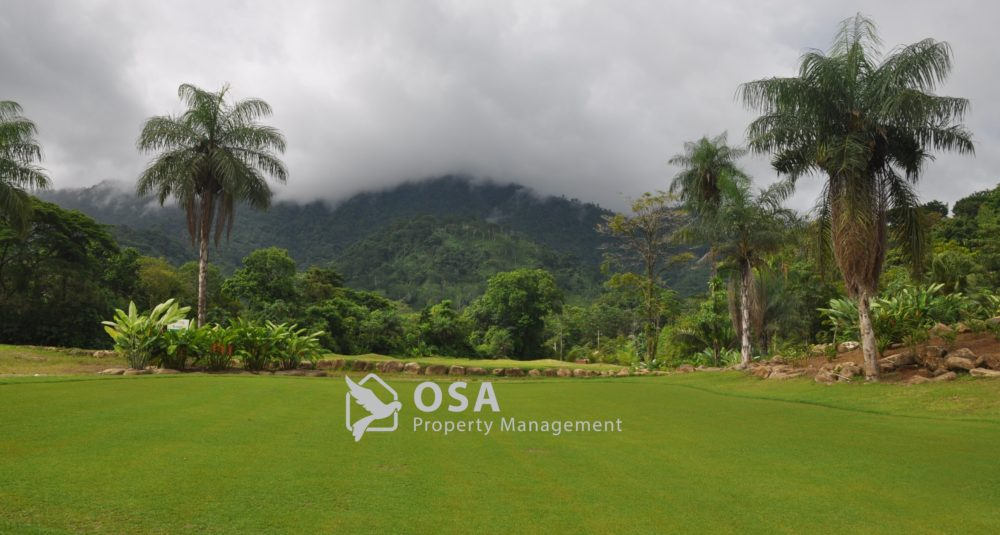 osa golf course palm trees