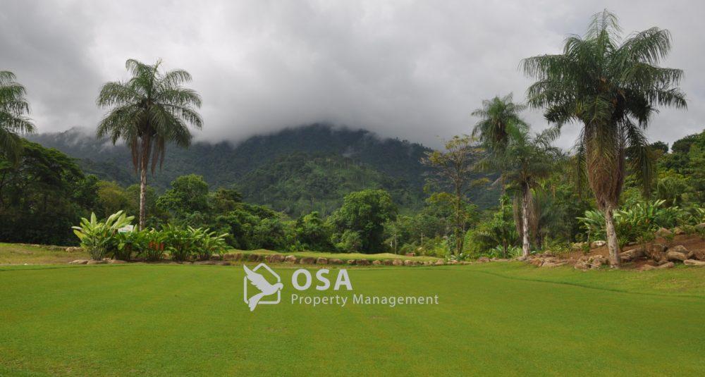 osa golf course palm trees