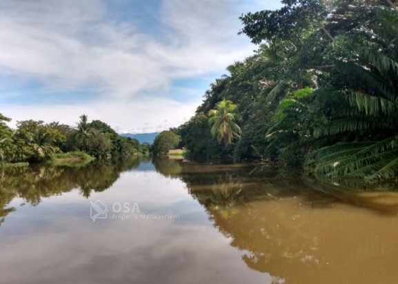 sierpe river wildlife tour