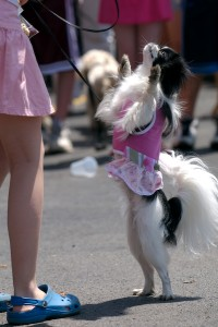 SRBA - Pet Parade - 2007 - 0705190476
