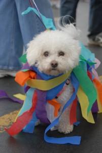 Spring Road Pet Parade 2010 7192