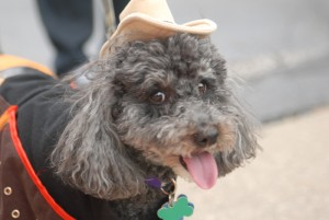 Spring Road Pet Parade 2010 7224