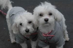 SRBA - Pet Parade - 2011 - CAS 9069