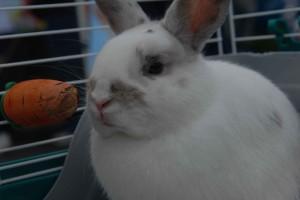 SRBA - Pet Parade - 2011 - CAS 9134