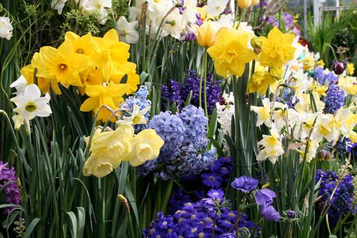 Spring Is Right Around the Corner