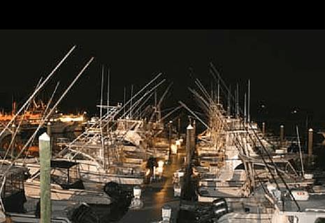 Night Blue Fishing