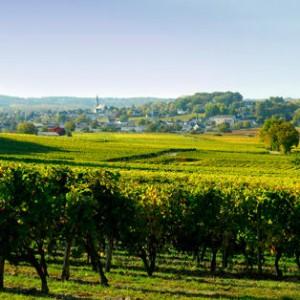 La 29e  édition du Salon des Vins de Loire se déroulera les 2, 3 & 4 février 2015