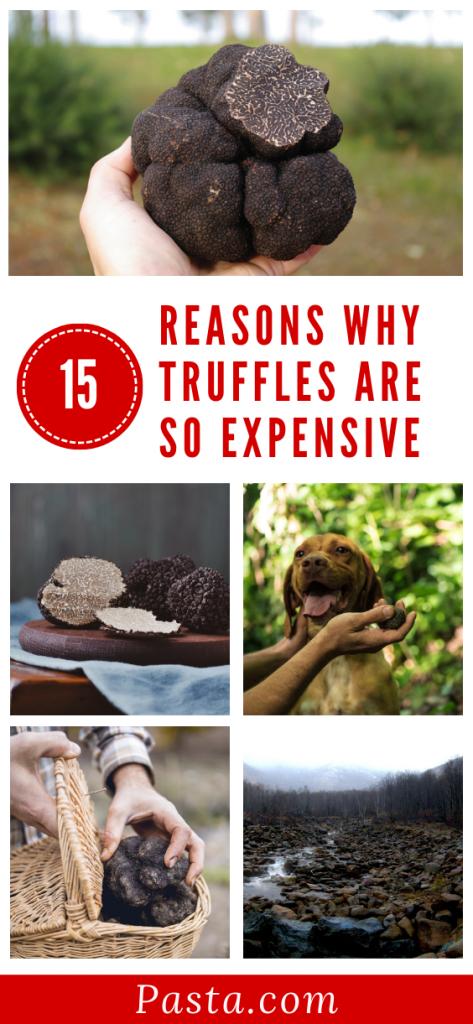 truffle-price