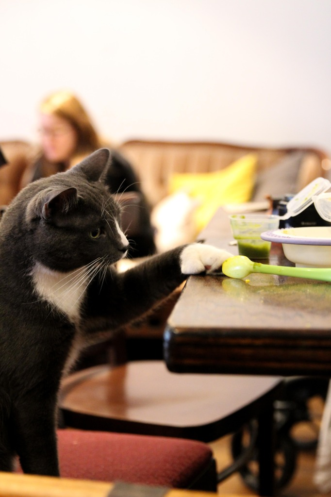 Cat Cafe. Duluth. Photo Magali Crevier.