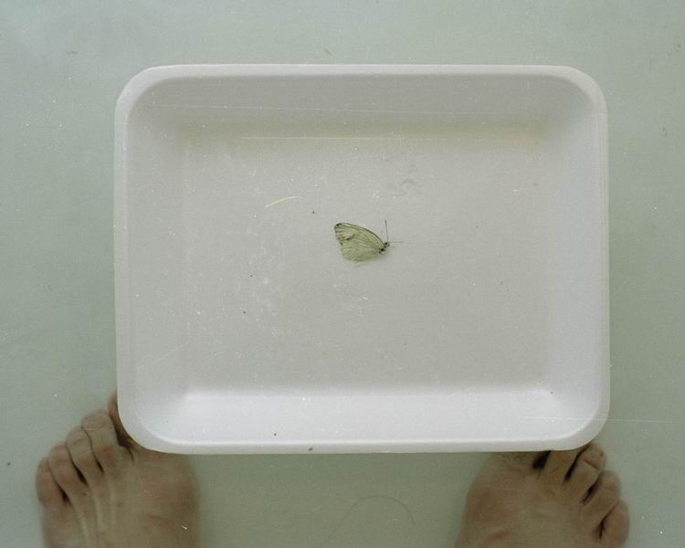 chih chien wang butterfly and feet