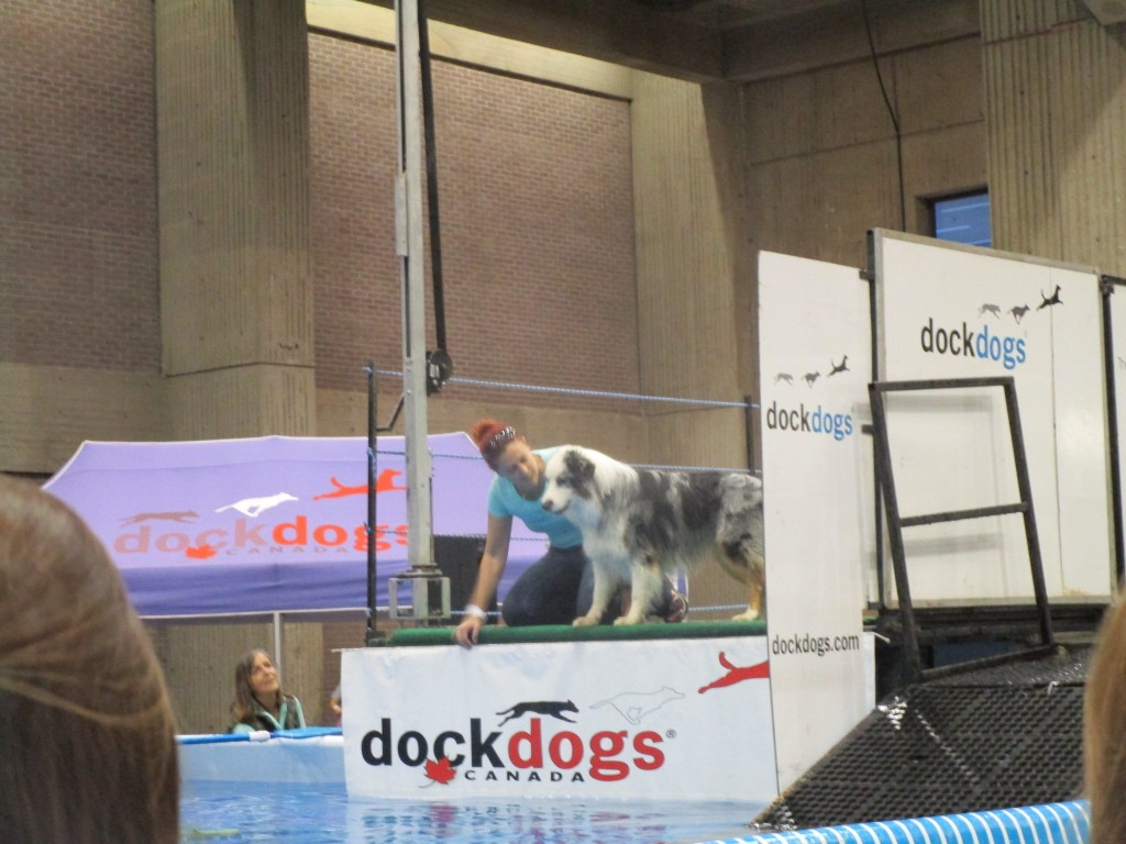 Dog not interested in jumping. SNAC. Photo Rachel LEvine