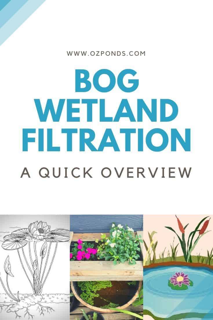 Bog-wetland-pond-overview-guide