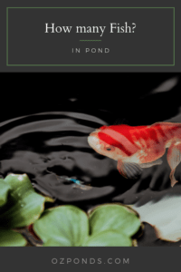 How many fish for my pond