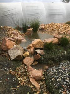 rain water pond with no pump