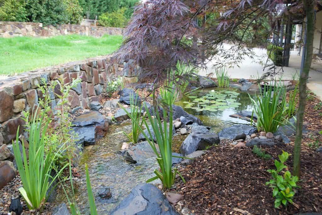 Ben harris-Donvale pond- Melbourne