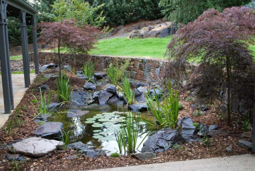 Ben harris- Donvale pond and stream- Melbourne, Australia