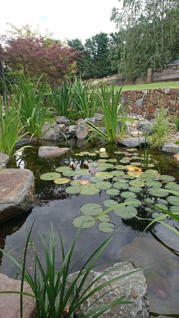Ben harris-Donvale pond-Plants-Melboune
