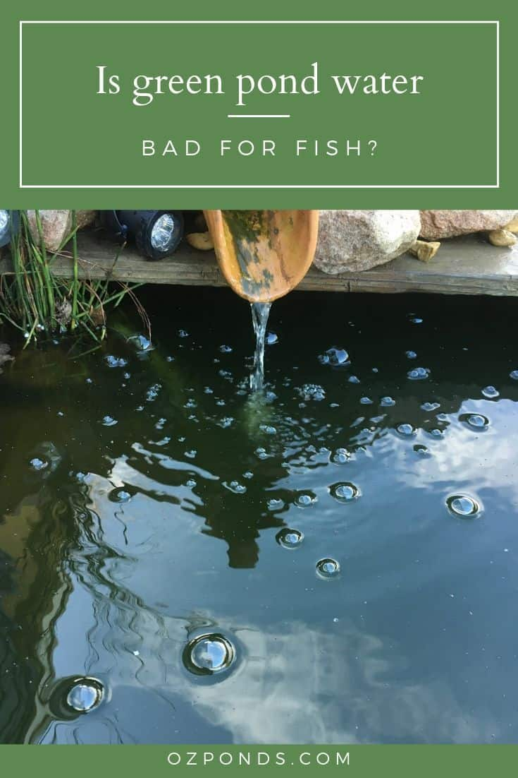 Is green pond water bad for fish?