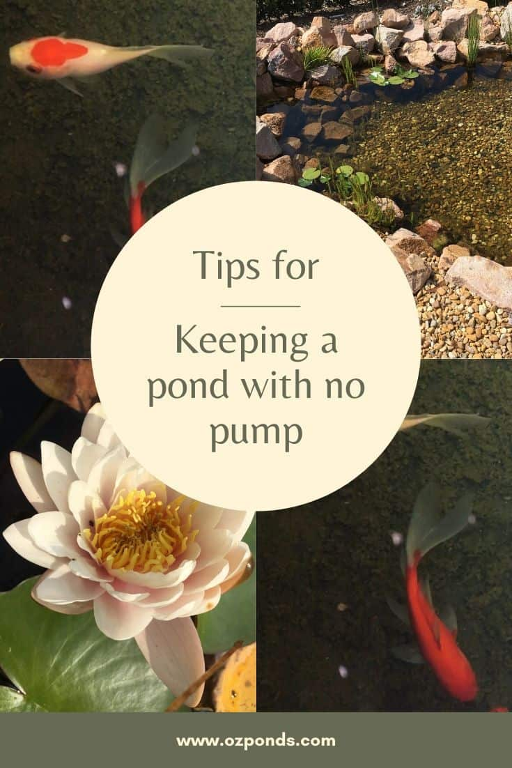 Keeping-a-pond-with-no-pump-