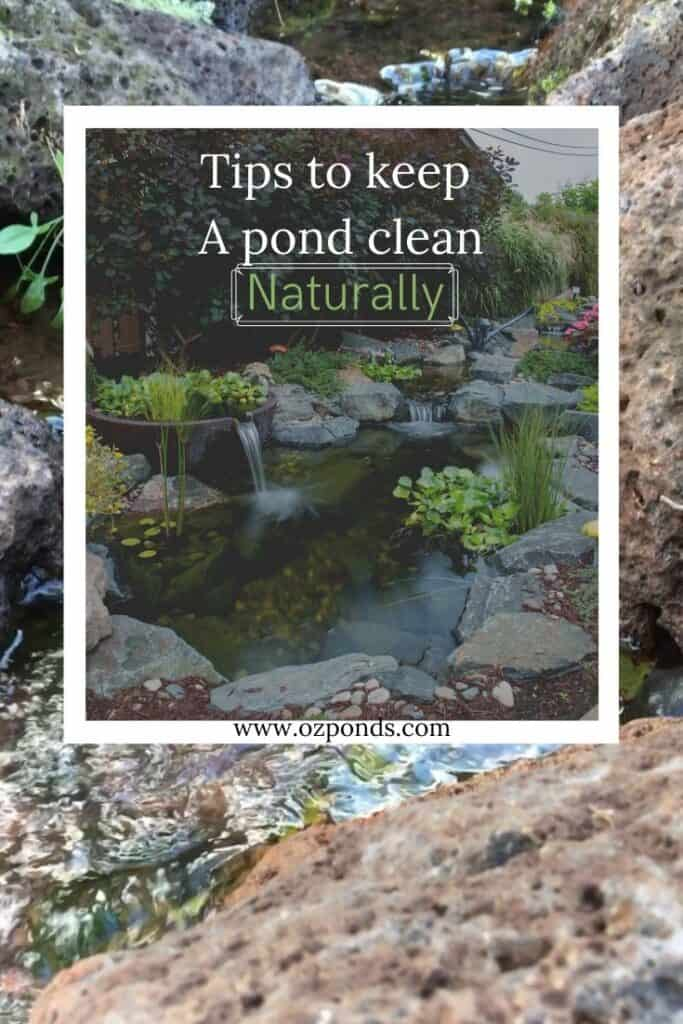 Tips-to-keep-a-pond-clean-naturally