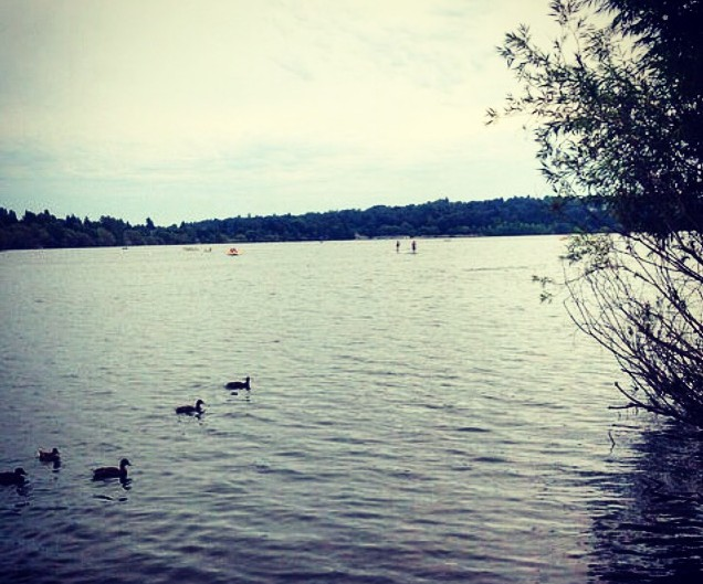 inspire and then let go - family of ducks in a lake