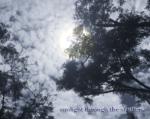 sunlight through the shutters : a short story