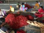 the chilli farmer's son