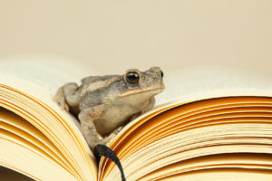 Gray toad pensively sitting in an open book
