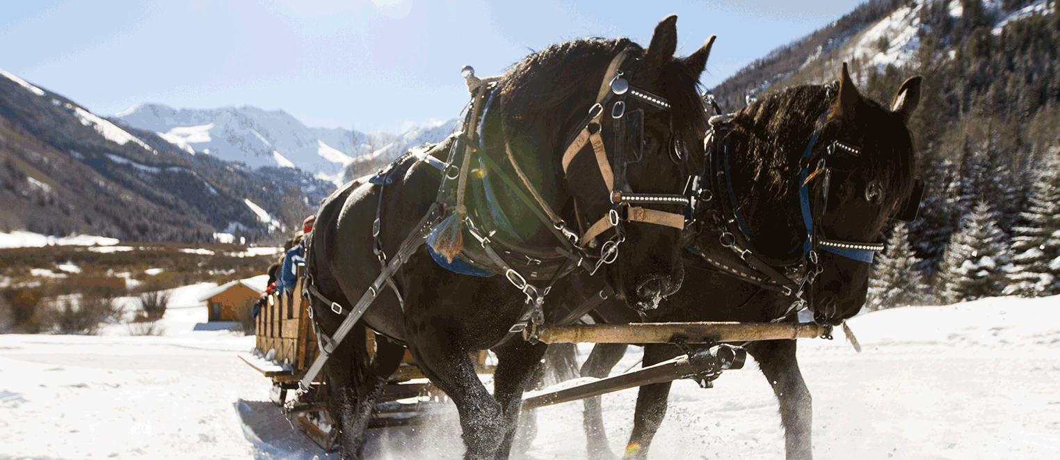 WINTER PRICING : LUNCH SLEIGH AND SKI