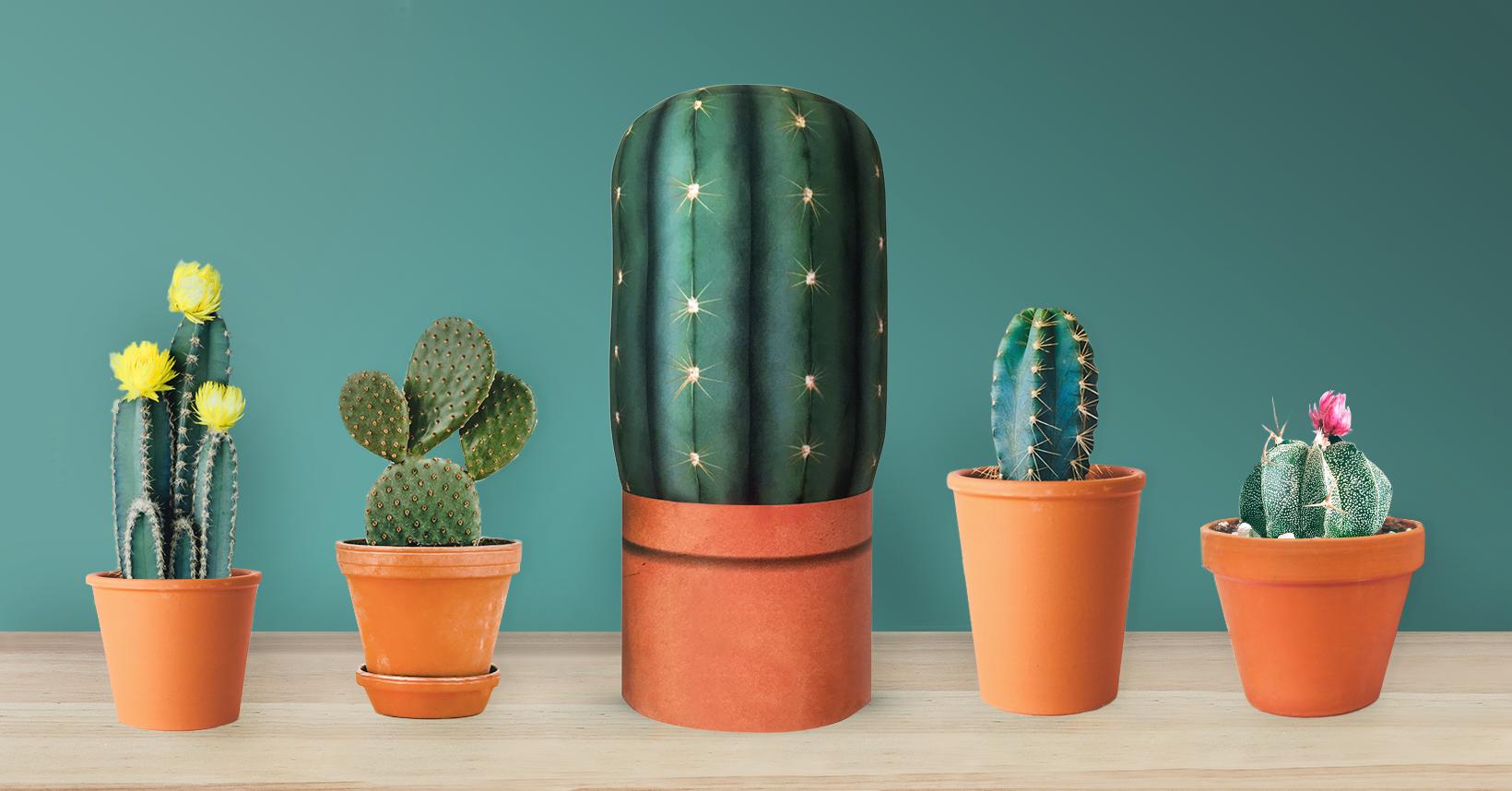 Cactus_Lineup
