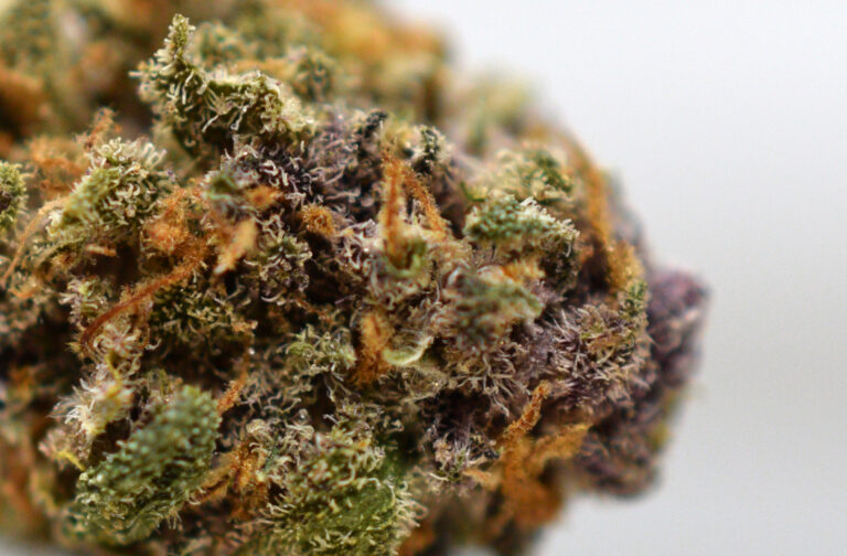 Purple Bomb Close Up
