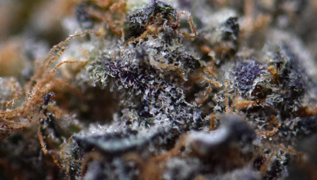 Apple Fritter - Close Up