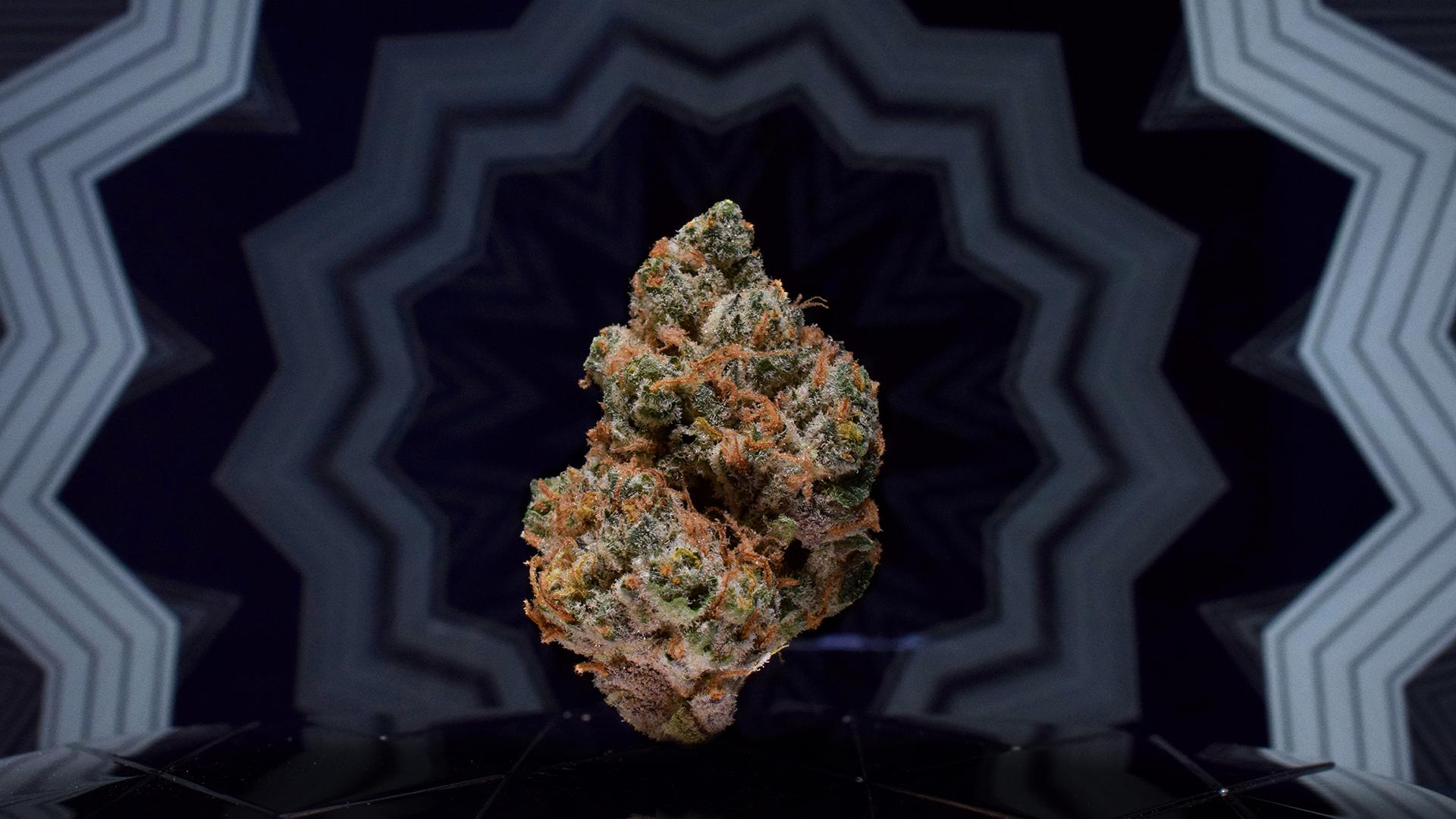 Conjugal Visit #5 Showcase 2 - Woodward Fine Cannabis