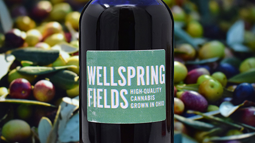 Wellspring Fields - Olive Oil Showcase 500px