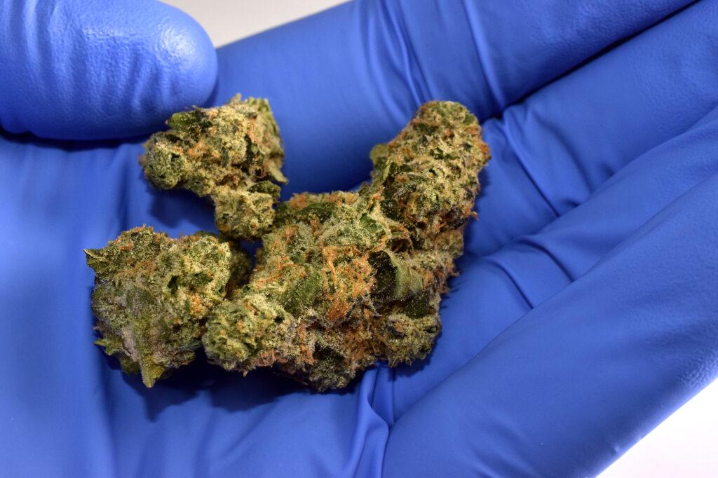 Triangle Mintz - Klutch - Bud in Hand