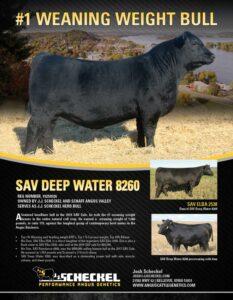 SAV Deep Water Flyer