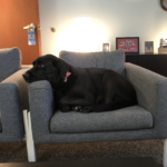 Charlotte in the office
