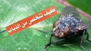 شركة مكافحة حشرات بالخفجي